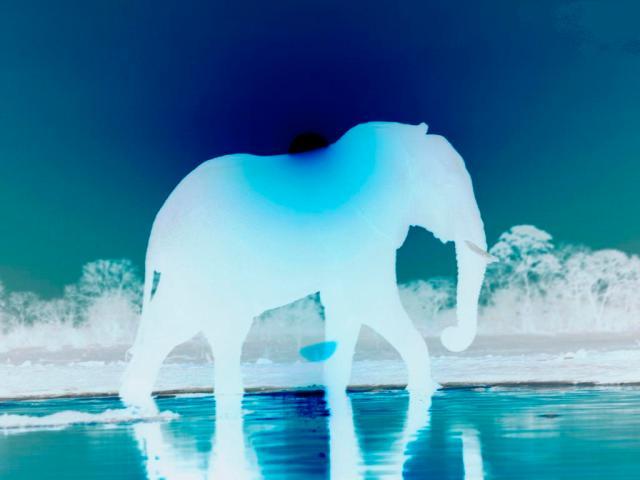 My Blueselephant